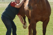 horse-therapy-1